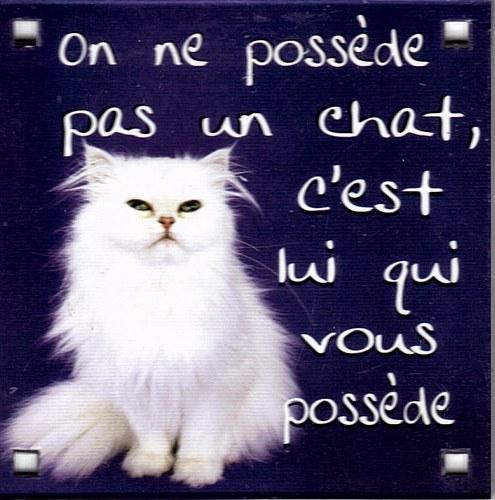 A propos chats libres du var est - Loi sur les chats et le voisinage ...