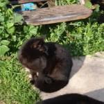 Lili dans le jardin