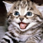 fond-ecran-animaux-chats-327